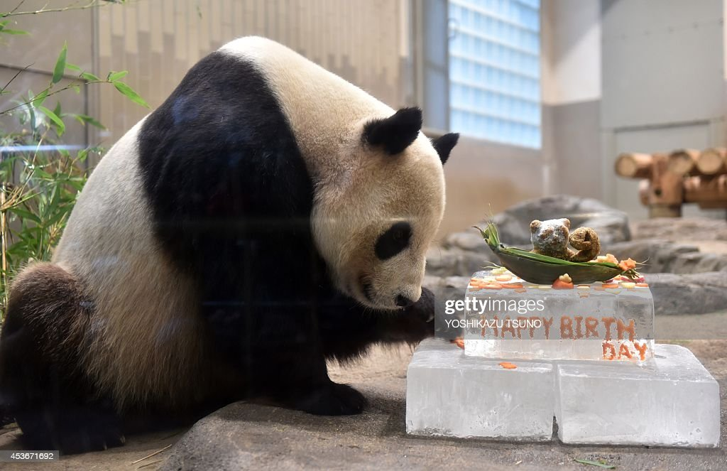 Surprising Ri Ri A Male Giant Panda Prepares To Eat A Birthday Cake In His Personalised Birthday Cards Veneteletsinfo
