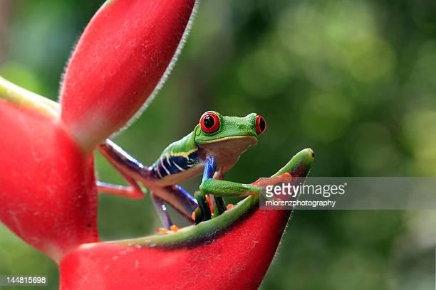 Ribbit in rainforest