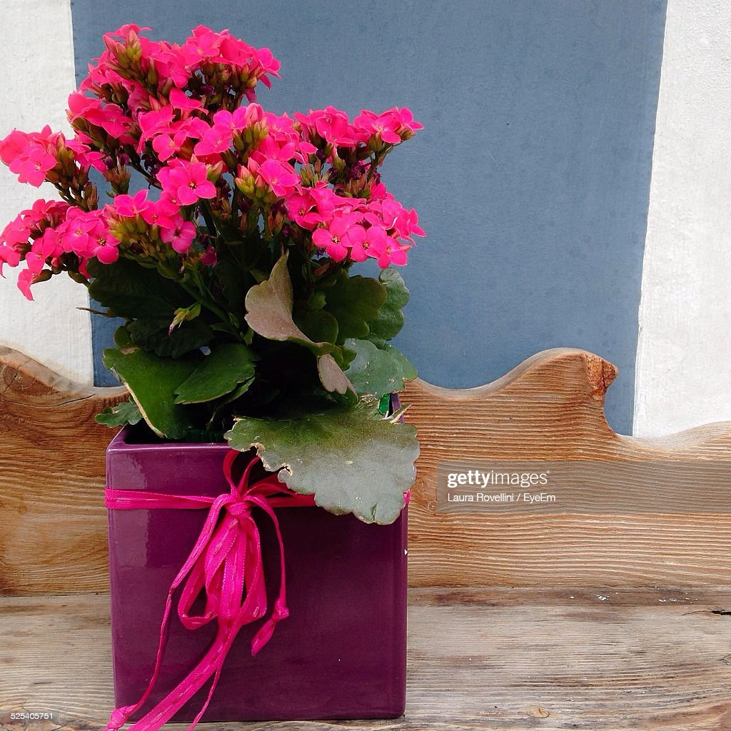 Ribbon Tied On Pink Flower Pot Stock Photo Getty Images