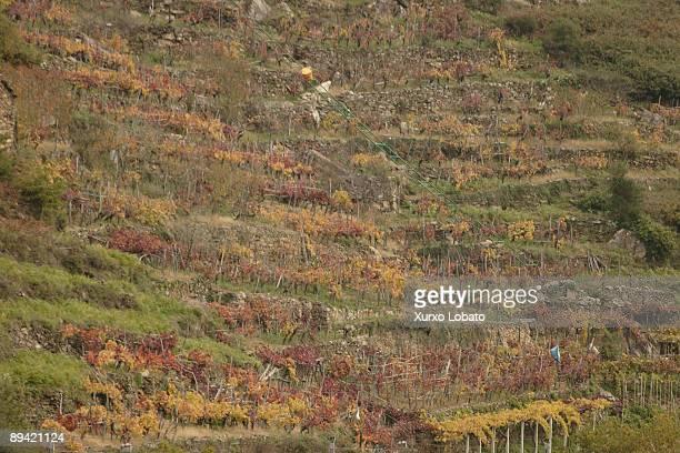 Ribeira Sacra Galicia Vineyards