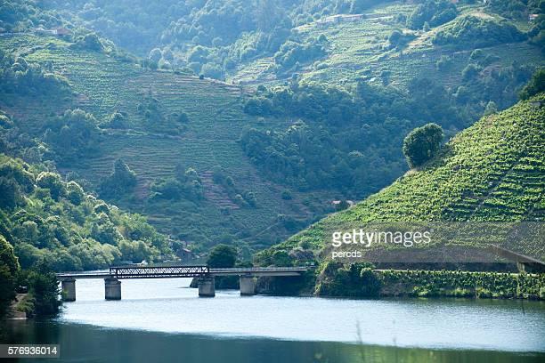 ribeira sacra viñedos y río miño, galicia, españa. - riverbank fotografías e imágenes de stock