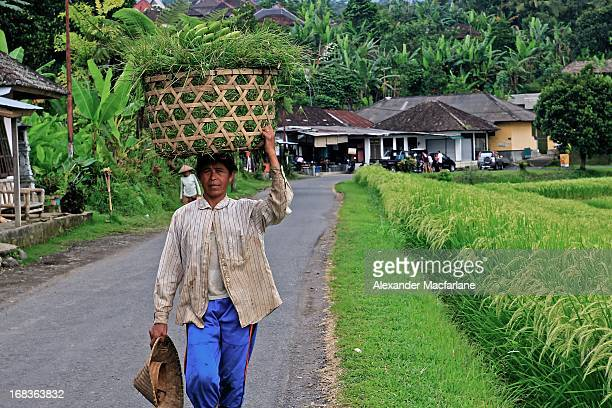 CONTENT] A rice farmer walks through Jatiluwih the Unesco heritage rice terraces in Bali The terraces are impossibly green and are know for there...