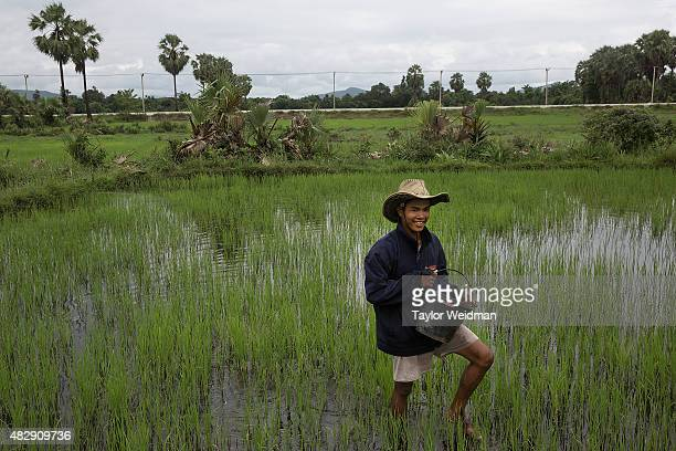 A rice farmer works in a field inside the planned Dawei SEZ on August 3 2015 in Nabule Myanmar The controversial multibillion dollar Dawei special...