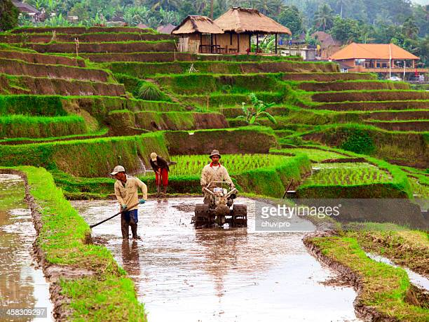Rice farmers on Bali, Indonesia