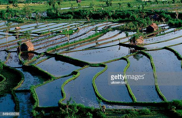rice field aerial view Indonesia Indian Ocean Bali