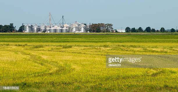 rice field and grain storage - arkansas stock photos and pictures