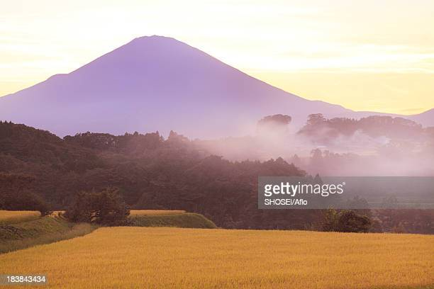 rice field and mount fuji at sunset, shizuoka prefecture - 九月 ストックフォトと画像