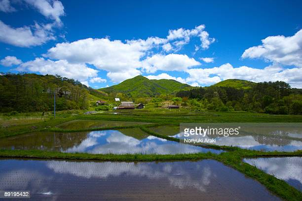 rice field and mountain - satoyama scenery stock pictures, royalty-free photos & images