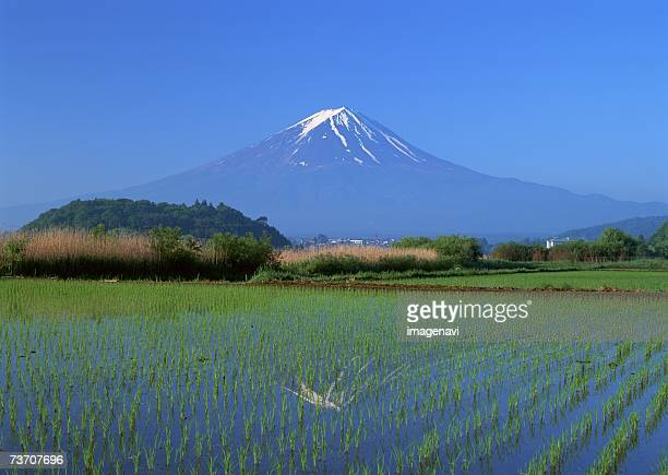 rice field and mt. fuji - yamanashi prefecture stock pictures, royalty-free photos & images