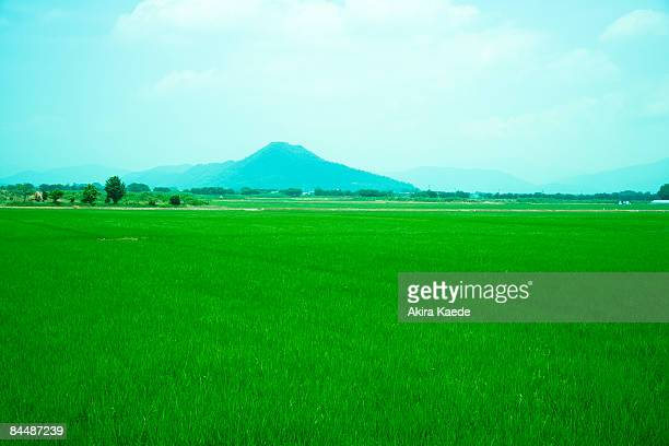 rice field and mt. yamamoto in summer - satoyama scenery stock pictures, royalty-free photos & images