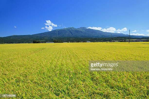 Rice field and Mt.Chokai, Yamagata prefecture