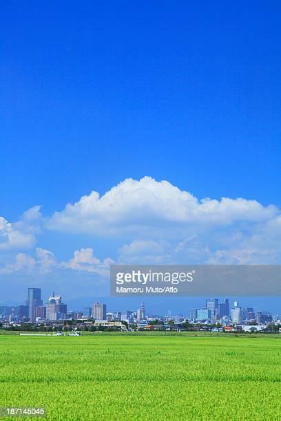 Rice field and Sendai cityscape, Miyagi Prefecture