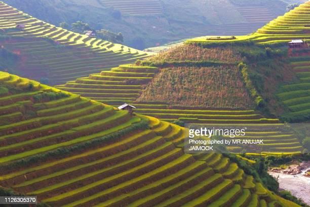 rice field at mu cang chai, vietnam - terrassenfeld stock-fotos und bilder