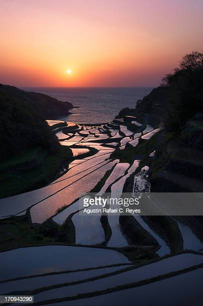 A rice field corridor with sunset