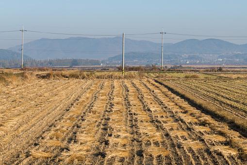 A Rice Field Finished Cultivation, Gyeongju, South Korea - gettyimageskorea