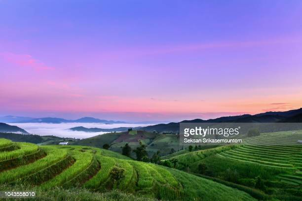 rice field in countryside (pa pong piang rice terraces) at sunrise - reisterrasse stock-fotos und bilder