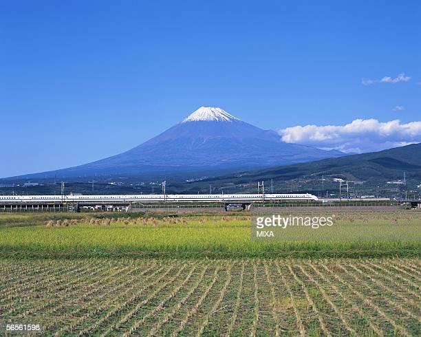 Rice field in front of Mt Fuji, Shizuoka, Japan