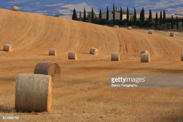 Rice field in Tuscany, Italy