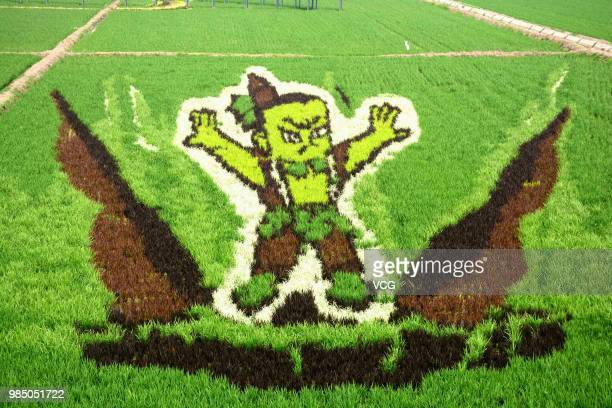 A 3D rice field painting featuring a cartoon character is on display at a paddy field at Sibe town on June 24 2018 in Shenyang Liaoning Province of...