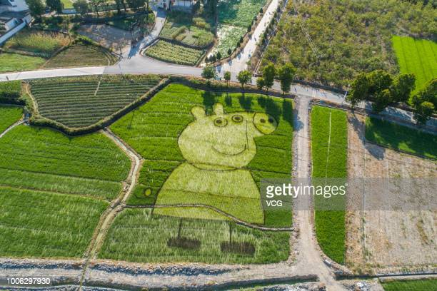 A rice field painting featuring cartoon character 'Peppa Pig' is on display at She County on July 20 2018 in Huangshan Anhui Province of China