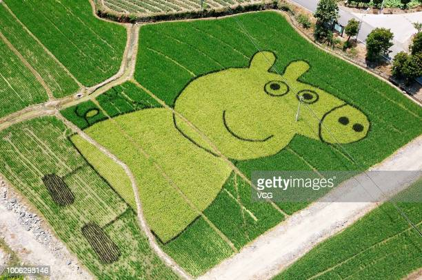 A rice field painting featuring cartoon character 'Peppa Pig' is on display at She County on July 21 2018 in Huangshan Anhui Province of China