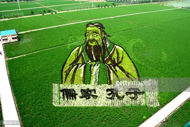 A 3D rice field painting featuring Confucius is on display at a paddy field at Sibe town on June 24 2018 in Shenyang Liaoning Province of China This...