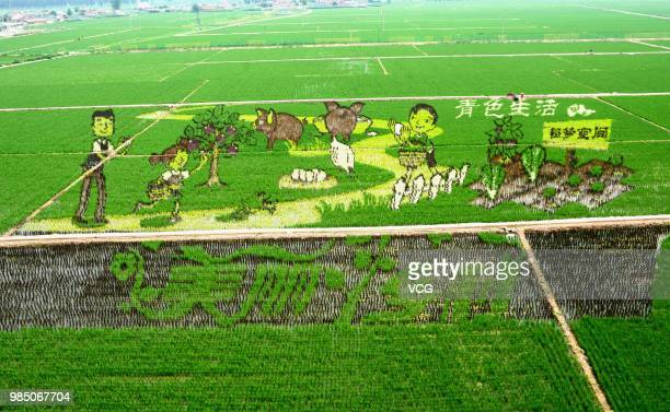 A 3D rice field painting featuring country life is on display at a paddy field at Sibe town on June 24 2018 in Shenyang Liaoning Province of China...