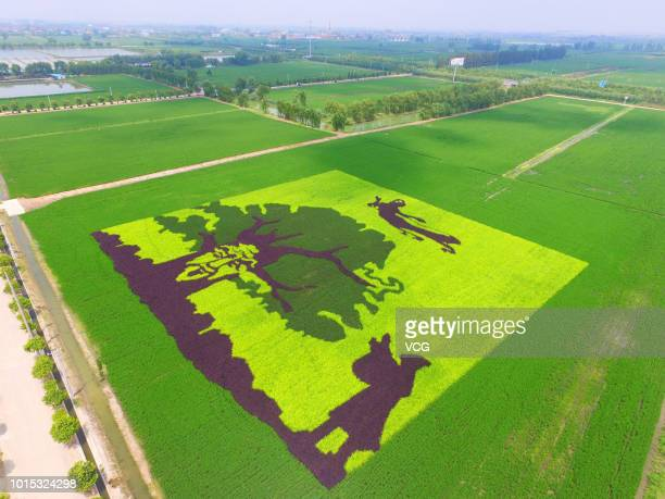 A rice field painting featuring Dong Yong and The Seventh Fairy characters of a Chinese legend 'Tian Xian Pei' is on display at a paddy field at...