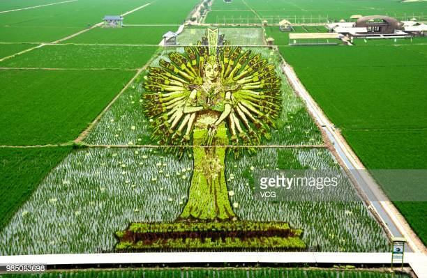 A 3D rice field painting featuring GuanYin of Thousand Arms and Eyes is on display at a paddy field at Sibe town on June 24 2018 in Shenyang Liaoning...