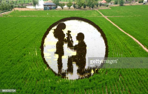 A 3D rice field painting featuring romance is on display at a paddy field at Sibe town on June 24 2018 in Shenyang Liaoning Province of China This...