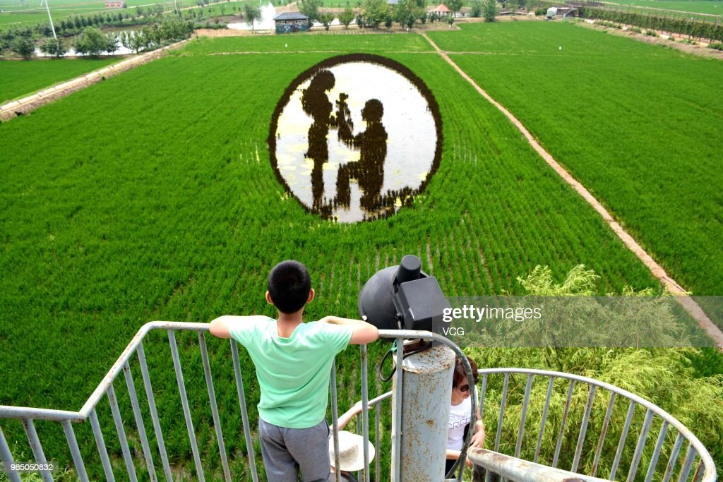 3D Rice Field Paintings In Shenyang