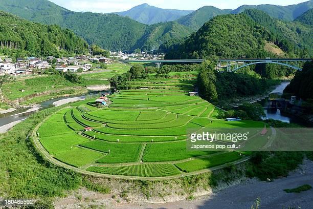 rice field - präfektur wakayama stock-fotos und bilder