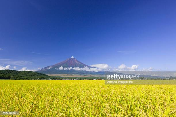 rice field - yamanashi prefecture stock pictures, royalty-free photos & images