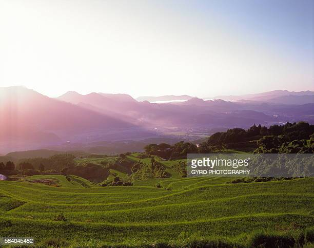 rice field, saga prefecture, japan - 佐賀県 ストックフォトと画像