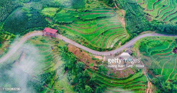 Rice Field Sapa