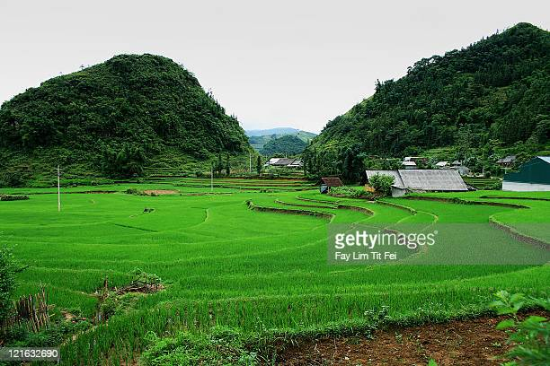 Rice field, Sapa, Vietman