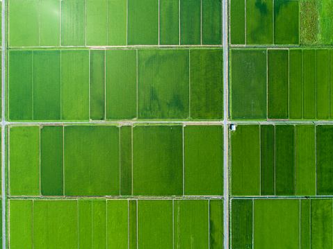 A rice field spreads in a vast land - gettyimageskorea