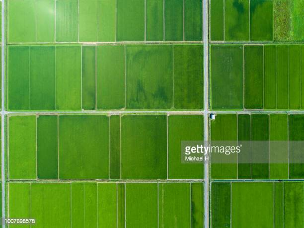 a rice field spreads in a vast land - aerial view stock pictures, royalty-free photos & images