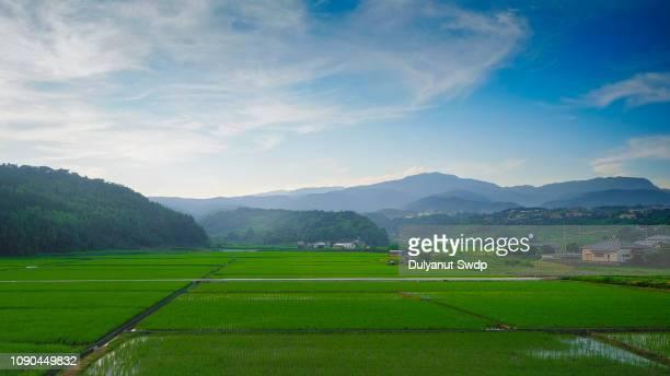rice field sunset at saga , japan - 佐賀県 ストックフォトと画像