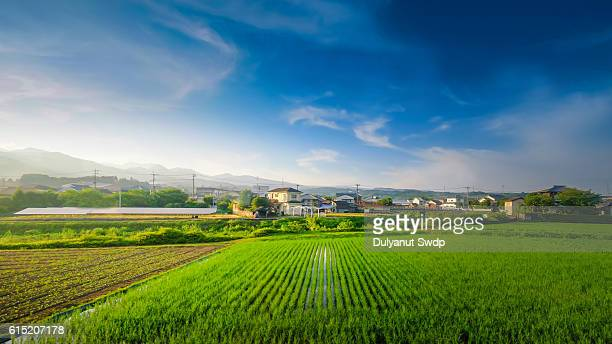 Rice field sunset at Saga , Japan