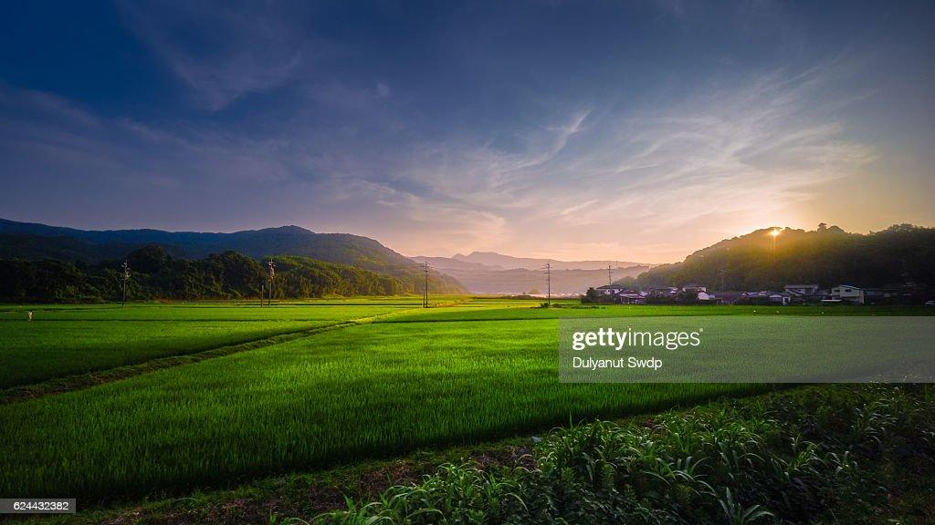 Rice field sunset at Saga , Japan : Stock-Foto