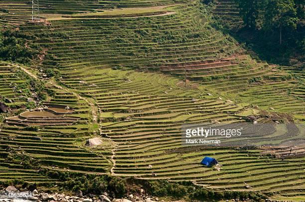 Rice field terracing near Sapa.