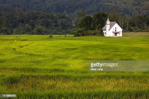 Rice fields and christian church in Tana Toraja