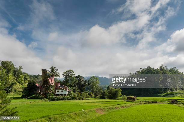Rice fields and landscape with a traditional house typical of the Tana Toraja