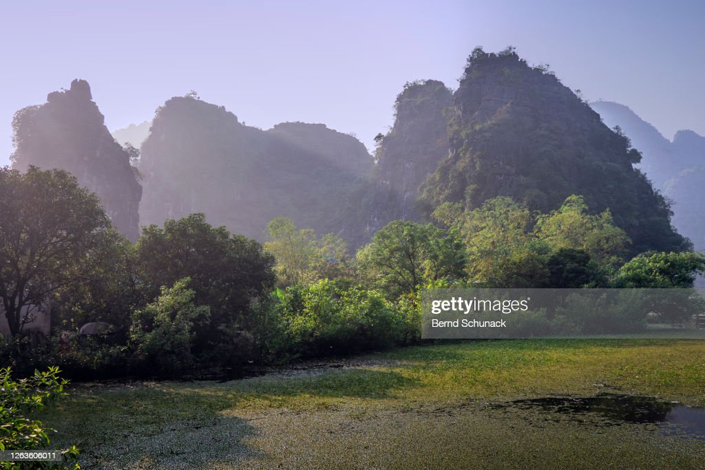 Rice fields and the karst rocks of Ninh Binh : Stock-Foto
