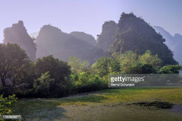 rice fields and the karst rocks of ninh binh - bernd schunack stock pictures, royalty-free photos & images