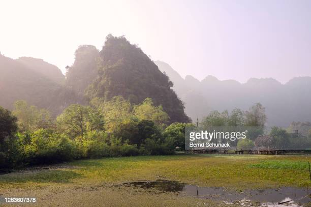 rice fields and the karst rocks of ninh binh - bernd schunack stockfoto's en -beelden