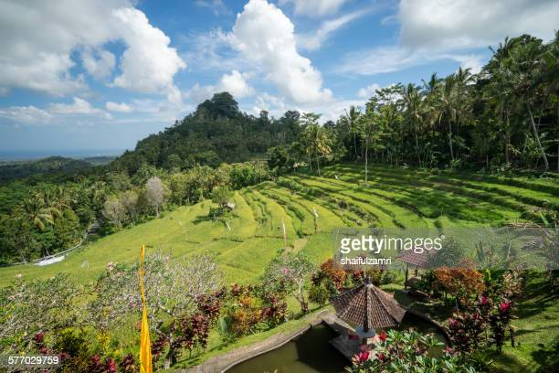 rice fields at bali - shaifulzamri stock pictures, royalty-free photos & images