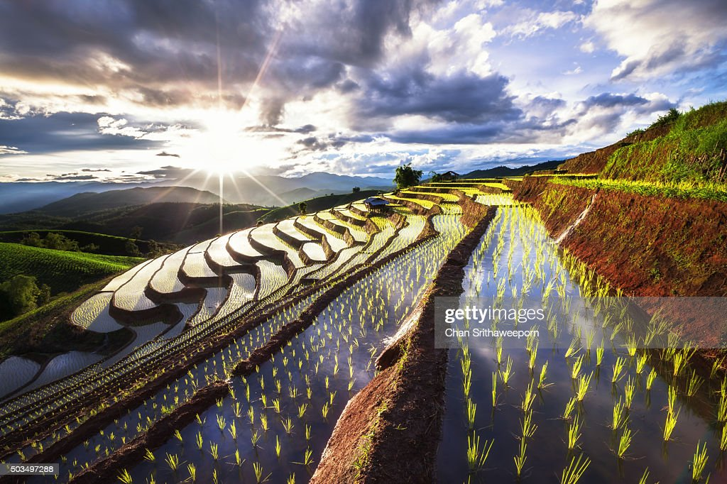 Rice Fields at Chiang Mai, Thailand : Stock-Foto
