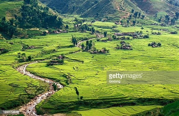 Rice fields in Sapa region North Vietnam Vietnam